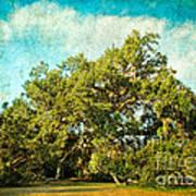 Ruskin Oak Art Print