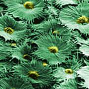 Russian Silverberry Leaf  Art Print