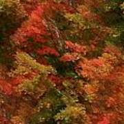 Rustling Autumn Leaves Art Print