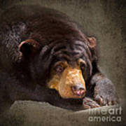 Sad Sun Bear Art Print