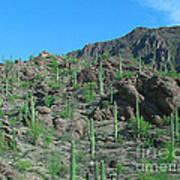 Saguara National Forest Protected Cactus Art Print