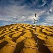 Sahara Desert, Tunisia, Africa Art Print