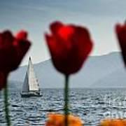 Sailing Boat And Tulip Art Print