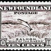 Salmon King Of The Rivers Art Print