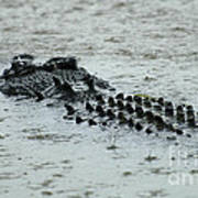Salt Water Crocodile 3 Art Print