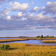 Saltwater Marshes At Cedar Key Florida Art Print by Tim Fitzharris
