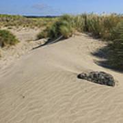 Sand And Grass Dunes Art Print