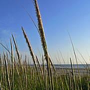 Sand Dune Grasses Art Print