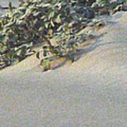 Sand Dune Greenery Art Print