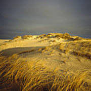 Sand Dunes And Beach Grass In Golden Print by James P. Blair
