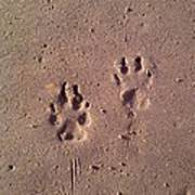 Sand Paws Art Print
