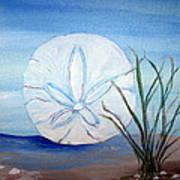 Sanddollar  Art Print