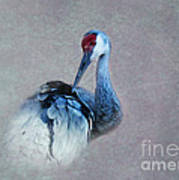 Sandhill Crane 2 Art Print