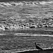 Sandpiper In The Surf Art Print