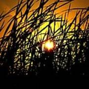 Sawgrass Sunrise Art Print