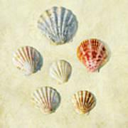 Scallop Shells Art Print