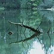 Scenic Woodland Lake Art Print