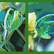 Science Class Diptych - Praying Mantis Art Print