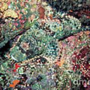 Scorpionfish Art Print
