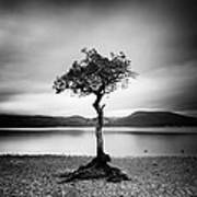 Scotland Milarrochy Tree Art Print by Nina Papiorek