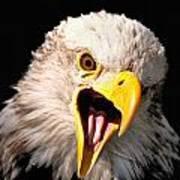 Screaming Eagle II Black Art Print