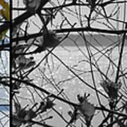 Sea Beyond The Branches Art Print