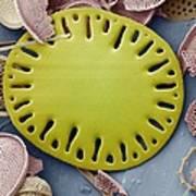 Sea Cucumber Plate Art Print