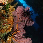 Sea Fans And Crinoid, Fiji Art Print