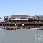 Sea Lions At Pier 39 San Francisco California . 7d14273 Art Print