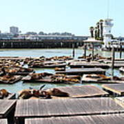 Sea Lions At Pier 39 San Francisco California . 7d14309 Print by Wingsdomain Art and Photography