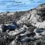 Sea Lions In Alaska Art Print