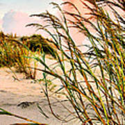 Sea Oats And Dunes Art Print by Kristin Elmquist