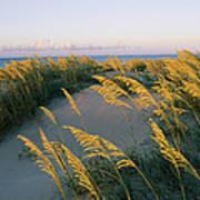 Sea Oats, Dunes, And Beach At Oregon Art Print
