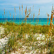 Sea Oats Gulf - Destin Art Print