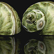 Sea Shells Photography Still Life Art Print