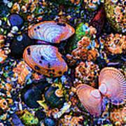 Sea Shells Sea Life Art Print