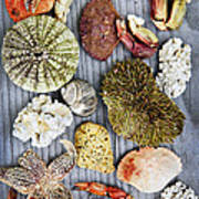 Sea Treasures Art Print