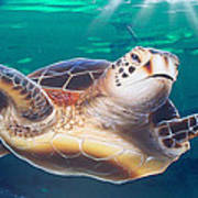 Sea Turtle Art Print by Mike Royal