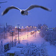 Seagull At Winter Art Print