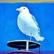Seagull Fun Colors Art Print