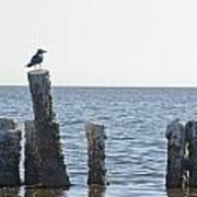 Seagull On A Post Art Print