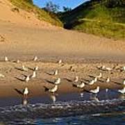 Seagulls At The Bowl Art Print