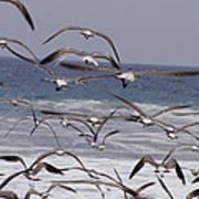 Seagulls Fly Over Surf Art Print