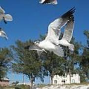 Seagulls On Anna Maria Island Art Print