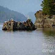 Seagulls On Rock Art Print