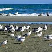 Seagulls Waiting  Art Print
