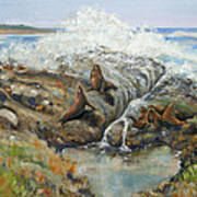 Seal Sanctuary Art Print by Max Mckenzie
