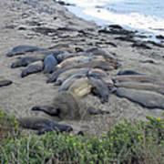 Seal Spa. Sand Bath Art Print