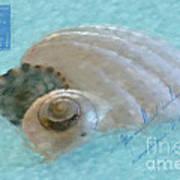 Seashells In Aqua Art Print