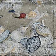 Seashells In The Surf Art Print